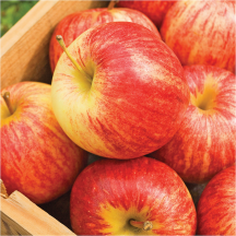 New Zealand Koru Apples product image.