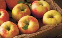 Honeycrisp Apples product image.