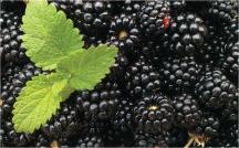 Blackberries product image.