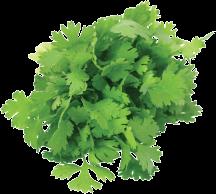 Cilantro or Cucumbers product image.