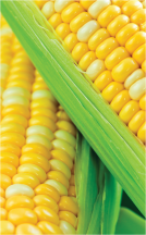 Corn on the Cob product image.