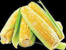 Corn product image.