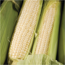 Corn on  product image.