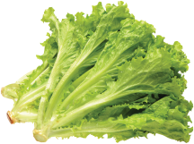 Romaine, Red or Green Leaf Lettuce product image.