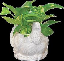 Cute Turkey Planter product image.
