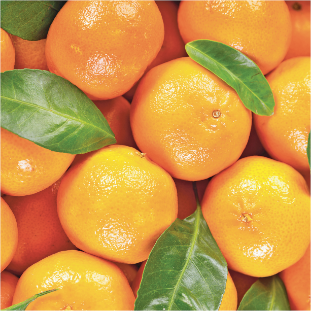 Minneola Tangelo product image.