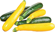 Zucchini or Yellow Squash product image.